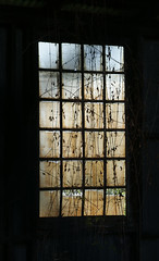Has Seen and Become One With (jimoliverphotography) Tags: old blue sky brown black window leaves clouds washington vines waterfront gray tan panes ole screen dirty bellingham wa