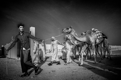 Escort the camels to the race