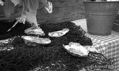 Sea treasure (KronaPhoto) Tags: sea norway treasure shell mat hav høst bakgrunn sjø 2011 skjell skatt