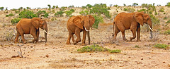 Kenia animals landscape