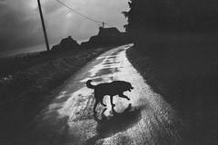 0105.jpg (wakoo22) Tags: blackandwhite dog ricoh grd