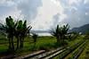 Danau (Lake) Buyan (Señor Bözé [Insta: _flying.solo_ ]) Tags: bali lake indonesia ulun danu danau bratan buyan