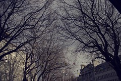 Tree2 (Cianod6) Tags: city trees urban dublin tree college nature vintage scene urbannature citycenter citycentre naturephotography planetree collegegreen dublincity naturesfinest urbanscene urbantrees naturescene urbancity natureandphotography urbannaturescene