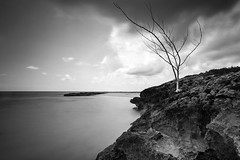 JUST THERE (Rober1000x) Tags: sea tree beach island rocks paradise caribbean stthomas saintthomas caribe 2014