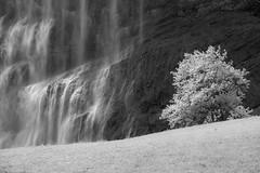 Staubbachfall, Lauterbrunnen (widmerstefan) Tags: blackandwhite bw alps landscape switzerland blackwhite waterfall europe wasserfall noiretblanc sw bern alpen schwarzweiss lauterbrunnen landschaft berneroberland staubbachfall nikondf