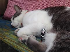 2014-05-31 16.47.03 (MaoPoPo & BiangBeiBei) Tags: cat toy billy okinawa figurine 貓 公仔 zamami 沖繩 座間味島 比利