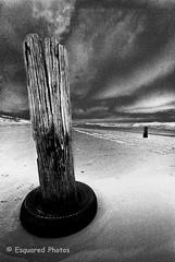 Desolate (esquared_photos) Tags: 2005 timber grain australia atmospheric wollongong portkembla bwfilm leicam4p mmbeach