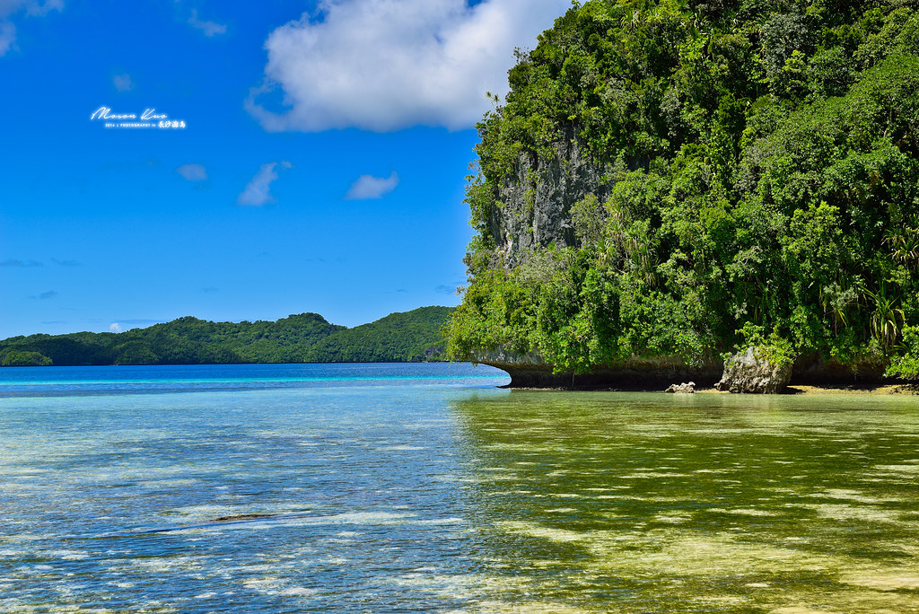 Design Bank Palau.The World S Most Recently Posted Photos Of Dolphin And Koror