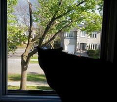 A Sunny Spring Still Sunday Morning (Jeffrey Coolwater) Tags: morning sunshine sunday peter blackcats