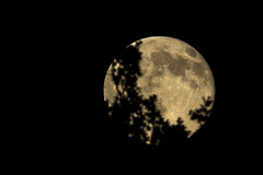 Sneaking up from behind the trees (Steven Vacher) Tags: trees moon tree night dark astro fullmoon astrophotography nightsky savage 2049 savagephotography