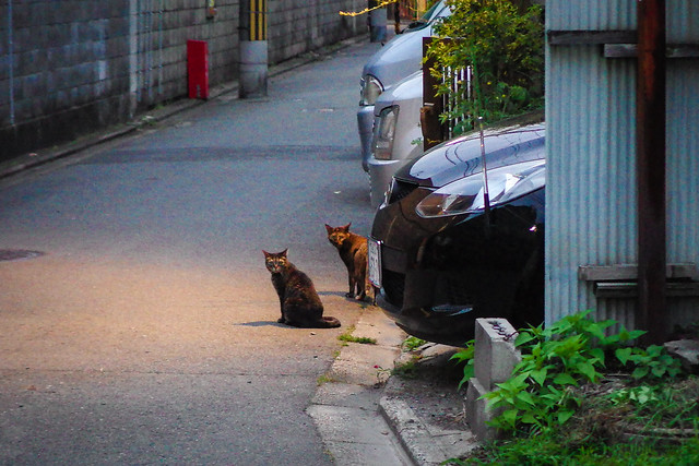 Today's Cat@2014-06-15