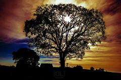 tree surrealism (Davi Leonardo) Tags: sky tree brasil fire photography photo flickr foto