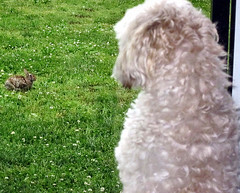 Bella Wants To Go Out To Play With The Bunny (marilyntunaitis) Tags: dog pet rabbit bunny bella 2014ayearinpictures shutterbugsdoorways