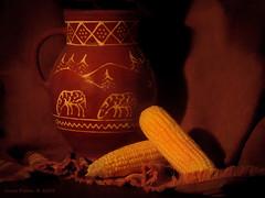 Corn (Grace Pedulla Dillon) Tags: life summer food garden still corn farm seasonal vegetable fresh vase pottery pitcher maize earsofcorn