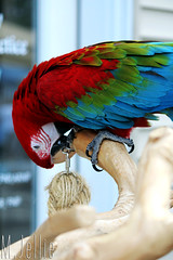 Playing (melissajellie) Tags: color bird animal colorful parrot canonrebelt5i