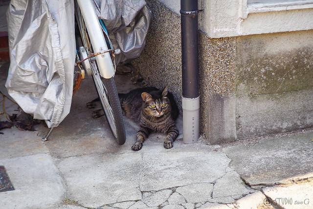 Today's Cat@2014-07-26