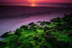 Purple Sunset (Benyamin Rahmani Photography) Tags: ocean sunset sea vacation green landscape urlaub northsea nordsee purplesky 2014 wangerooge