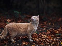 Street cat 177 (Yalitas) Tags: autumn streetcat cat cats кот кошка котка kedi chat feline kat katze katzen kot kotka pet felino kottur katte kass kitty gato kocka gatta katzchen canon