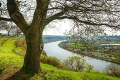 Der Rhein von oben (impossiblejoker) Tags: rhein rhine fluss river wasser water baum tree aussicht erpelerley frühling spring nikon view deutschland germany