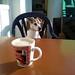 Jacky genießt die ersten warmen Sonnenstrahlen und ich meinen Kaffee 03-03-2017
