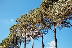 Quanto mais, melhor... (Centim) Tags: bh belohorizonte minasgerais mg brasil br cidade estado país sudeste capital continentesulamericano américadosul foto fotografia nikon d90 céu árvore vegetação natureza parque parquejacquescousteau