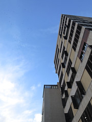 Encopetado. (elojeador) Tags: piso ventana postigo contraventana cielo nube bandada estornino bandadadeestorninos oporsobrelascopas elojeador