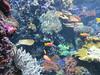 00734913 Aquarium Berlin 1 - 2017 (golli43) Tags: aquariumberlin zoo fische krokodile quallen wasser wasserpflanzen amphibien insekten unterwasserwelt