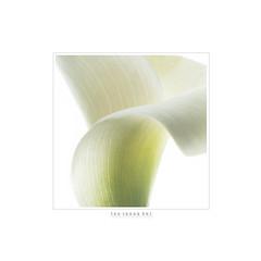 카라.Kara . . . 어젠 생각지도 않았던 꽃을 받았다 따뜻한 그 마음을 나 스럽게 남겨두고 싶었다 ㅡㅡㅡ #선물 #꽃 #기억  #사진작가이정휘  #flower #kara #memory  #gift #Nikon  #korea  ㅡㅡㅡ http://facebook.com/LEEJHPHOTO Korea CopyRight. 2017. LEE,JEUNGHUI All Rights Reserved. All Pictures cannot be copied with (artlens64) Tags: 선물 꽃 기억 사진작가이정휘 flower kara memory gift nikon korea
