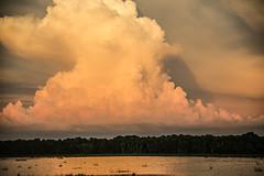 Thunderhead (wyojones) Tags: florida myakkariverstatepark uppermyakkalake water lake sunset cloudscape thunderhead clouds