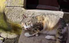 Tabby cat with green eyes (jasbond007) Tags: óbidos portugal jasbond007 nigeldawson copyrightnigeldawson2017 pentax k3ii smcpentaxda1017mmf3545fisheyeedif