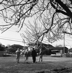 Playing croquet (odeleapple) Tags: rolleicord lv schneider xenar 75mm neopan100acros film monochrome bw croquet ume