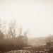 Rotting marsh (Rosenthal Photography) Tags: bäume asa400 pflanzen ff135 oste landschaft wiese prakticasupertl1000 offensen städte rolleiredbird400 20170203 35mm analog flus dörfer siedlungen landscape nature river marsh trees fields praktica rollei redbird bw sepia epson v800 mist fog