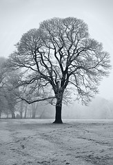 """Frosty"" (rodburkey) Tags: smileonsaturday treesinthepicture liverpool frost"