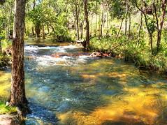A stream near Florence Falls (Digidoc2) Tags: stream curents rapids water falls trees litchfieldpark australia
