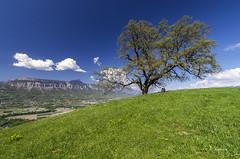 Les amoureux du vieux chêne (Jacques Isner) Tags: arbre chêne vieuxchêne pentax pentaxk5 pentaxart pentaxflickraward paysage nature grenoble grésivaudan