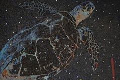 Mosaic Hawskbill Turtle (HockeyholicAZ) Tags: cayman grandcayman caymanislands tropical caribbean ocean blue snorkel scuba padi ssi naui nitrox fish coral sponge bwi britishwestindies ivan atatude divetech lighthousepoint indies camanabay jimhellemn mosaic observationtower tiles art