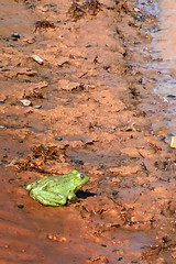 Life in the desert (Bergfex_Tirol) Tags: bergfex marokko morocco desert sahara wadi draa frosch frog green grün