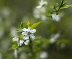 Nature is waking up (Krzysztof Kozłowski) Tags: flowers natuer