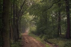 Eifel Path (Netsrak) Tags: baum bäume forst landschaft natur nebel wald fog forest landscape mist nature tree trees woods eifel rheinbach nordrheinwestfalen deutschland de