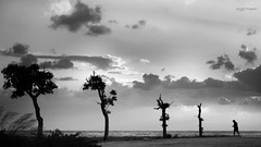 La vita è un lungo viaggio da fare a piedi (Angelo Trapani) Tags: metafora vita viaggio alberi uomo natura cammino avversità crescita