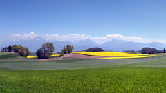 Wavering rapeseed fields (Karl Le Gros) Tags: colza grancy switzerland xaviervonerlach 2017 cantondevaud landscape paysage 澤維爾·馮·埃拉赫 panorama fields rapeseed