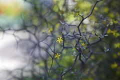 Summer beginnings (Getting Better Shots) Tags: flowers summer sun nature spring branches