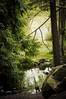 Forest glade (Repp1) Tags: green pool forest bc vert burnaby forêt étang deerlake greenbeautyforlife