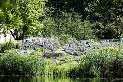 Botanischer Garten, Mnster (FX Communication // Photo Lab) Tags: germany deutschland mai nrw universitt mnster wwu westfalen 2014 botanischergarten westflische wilhelms stadtmnster