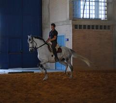Prueba de doma, feria del caballo en la feria de Jerez de la Frontera.