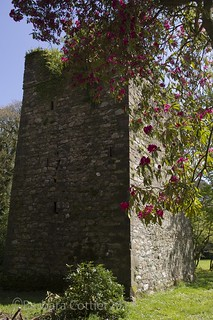Towers and Flowers