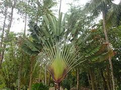"""Nous avions déjà vu beaucoup de palmiers mais des comme ça... • <a style=""""font-size:0.8em;"""" href=""""http://www.flickr.com/photos/113766675@N07/14137918230/"""" target=""""_blank"""">View on Flickr</a>"""