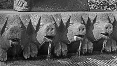 Schweinebrunnen in Zons am Rhein / NRW / Germany (KL57Foto) Tags: pen germany deutschland am place olympus medieval stadt nrw middle rhein ages gebude interest nordrheinwestfalen rheinland rhineland feature zons ep1 feste historisch mittelalter historisches sehenswrdigkeit festezons zonsamrhein stadtzons kl57foto historicaltourist