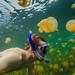 Swimming in Jelly Fish Lake