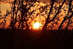 Sunrise in Calgary